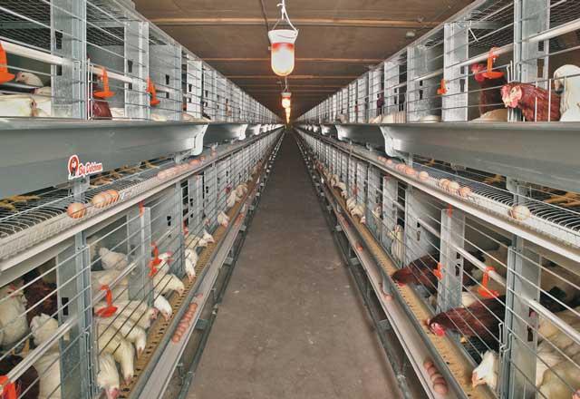 ユーロベント種鶏ケージシステム