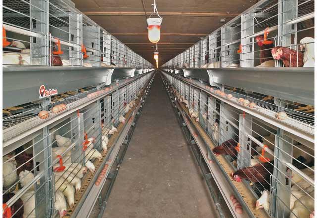 種鶏ケージシステム
